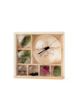Kikkerland – Huckleberry insectenbox
